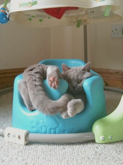 3 Gizmo, Cat,